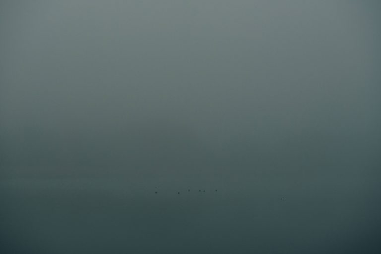 Birds in a foggy harbour