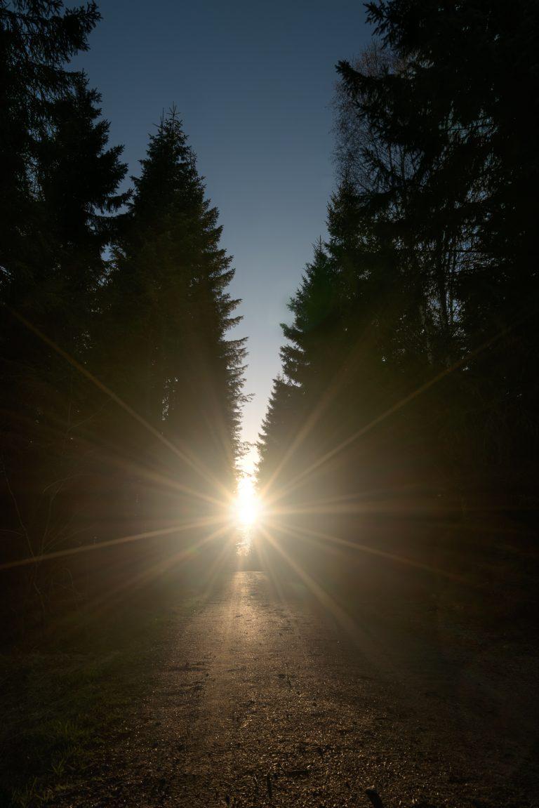 Lys-i-skoven